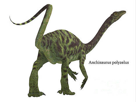 Anchisaurus Dinosaur Tail by Corey Ford