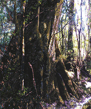 Ancient Pandanii Cradle Mountain Gondwana Rainforest by Sarah King