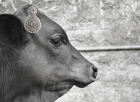 Sumit Mehndiratta - Animal royalty 13