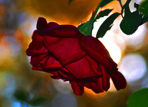Another Rose by Russ Mullen