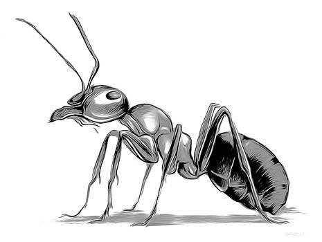 Greg Joens - Ant