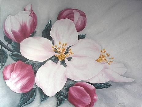 Apfelblueten by Haike Espenhain