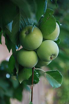 Apples of the Season by Kim Blumenstein