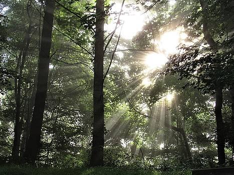 Arbor Energy by Joshua Bales