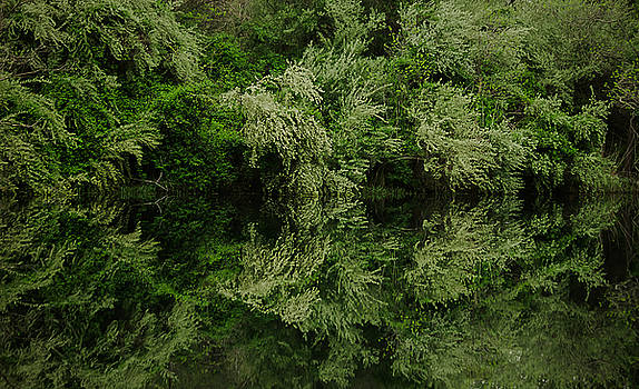 Arboreality by Mary Nash-Pyott