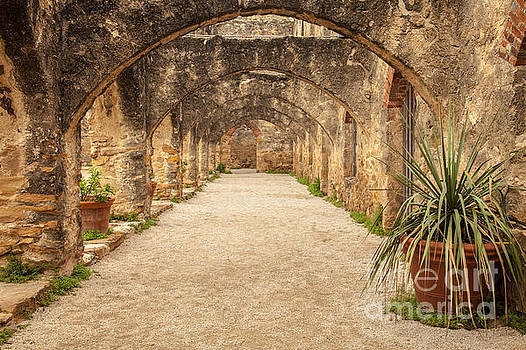 Arches by Iris Greenwell