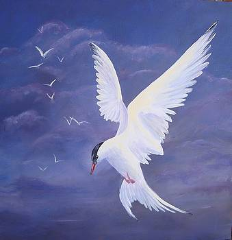 Arctic Tern by Kathleen Tucker