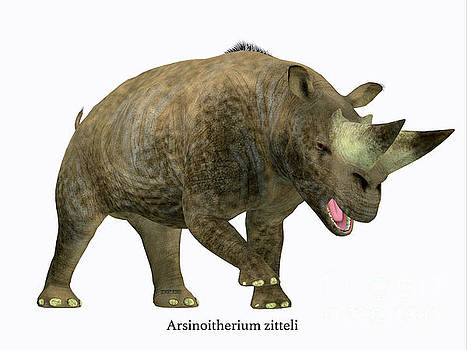Arsinoitherium Mammal Side Profile by Corey Ford