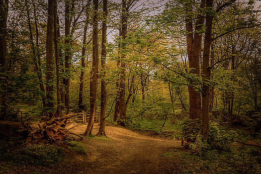Ashenbank Woods by Bren Ryan