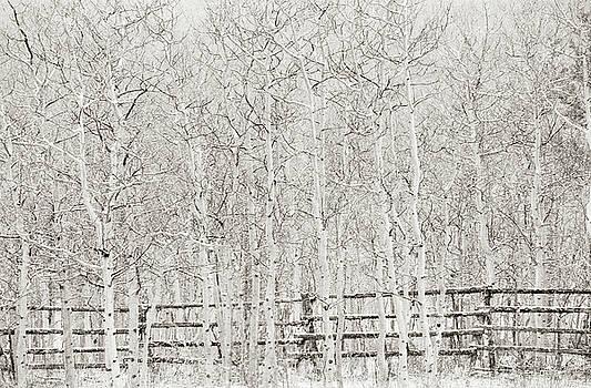 Scott Wheeler - Aspen in Winter