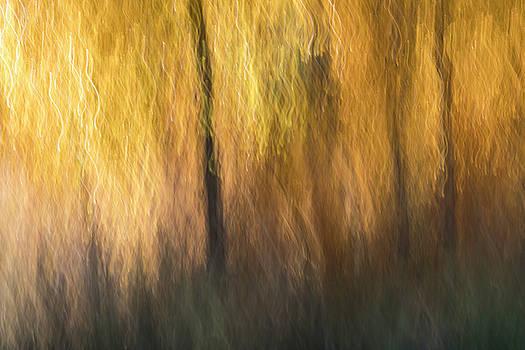Autumn Afternoon by Deborah Hughes