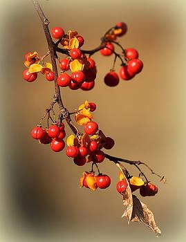 Rosanne Jordan - Autumn Berries
