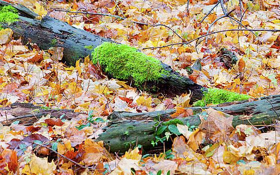 Autumn Color by Fran Riley