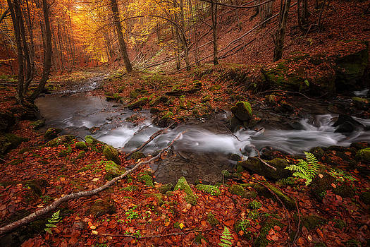 Autumn colors forest and small creek by Nickolay Khoroshkov
