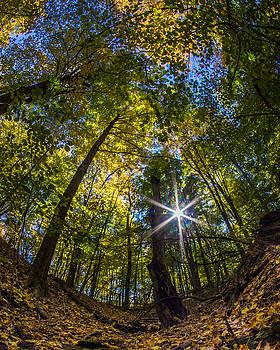 Chris Bordeleau - Autumn Dry Creek