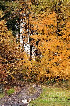 Autumn forest road by Michal Boubin