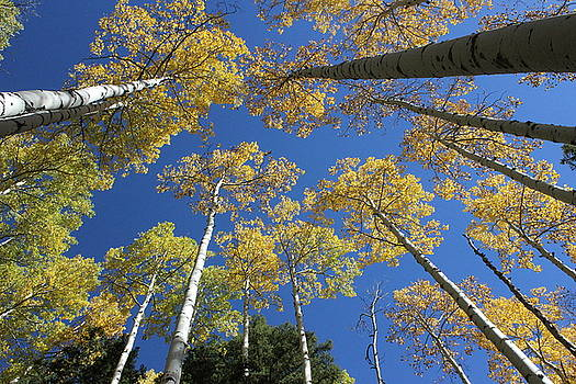 Autumn Gold by Craig Butler
