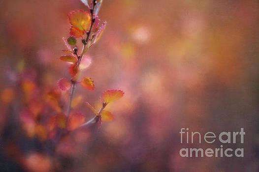 Autumn gold by Priska Wettstein