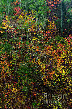 Autumn Hillside Blue Ridge Parkway by Thomas R Fletcher