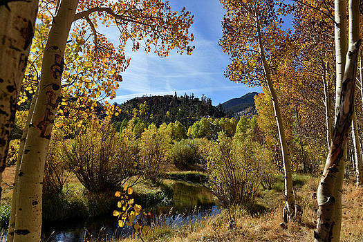 Autumn in Bishop Creek by Dung Ma