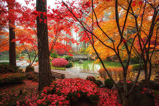 Autumn in Manito Park by James Richman