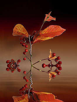 Autumn leafs and red berries by David French