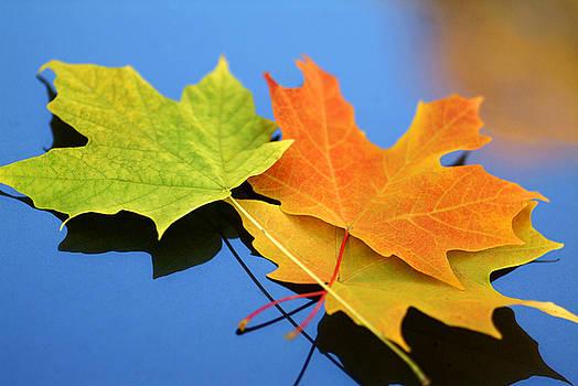 Autumn Leaves - Foliage by Dmitriy Margolin