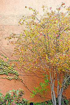 Robert Meyers-Lussier - Autumn Leaves, a Vine and Adobe