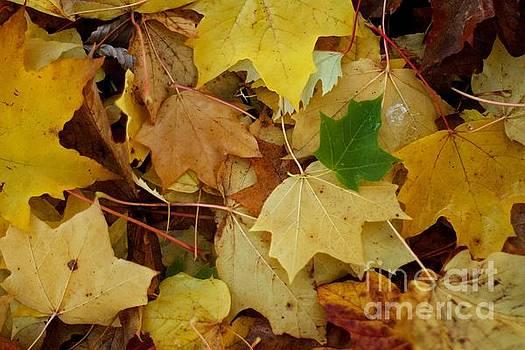 Autumn leaves  by Gary Bridger