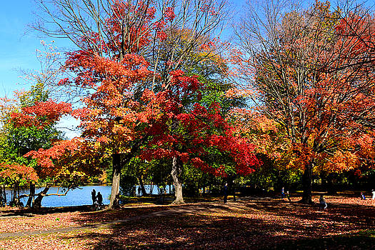 Autumn Leaves in Prospect Park by Diane Lent