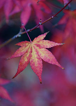 Autumn Leaves by Keith Boone