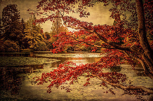 Autumn Leaves by Bren Ryan