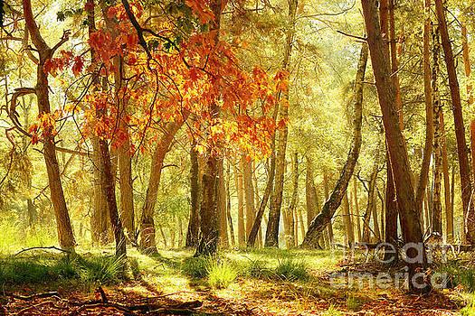 LHJB Photography - Autumn light...