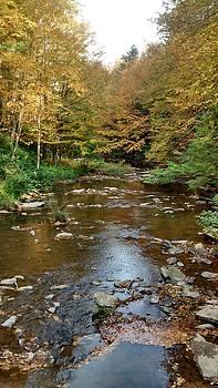 Patricia Taylor - Autumn Mountain Stream