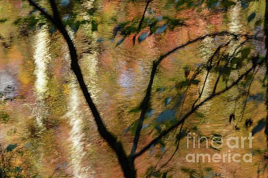 Autumn Reflection by John Greco