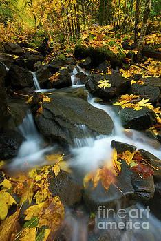 Autumn Rush by Mike Dawson