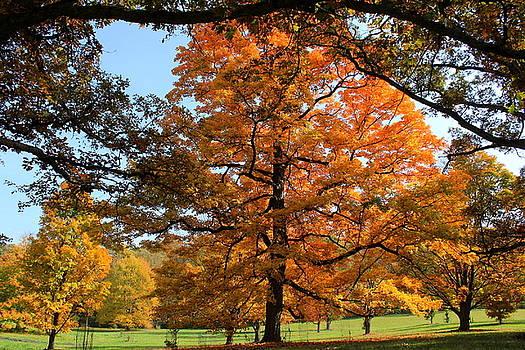 Rosanne Jordan - Autumn Splendor