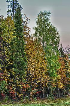 Autumn by Tatiana Tyumeneva