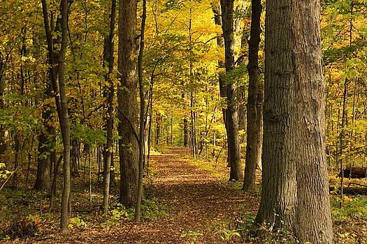 Rosanne Jordan - Autumn Trail