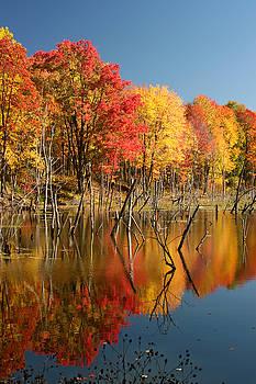 Autumn trees at Moraine State Park by Doris Dumrauf