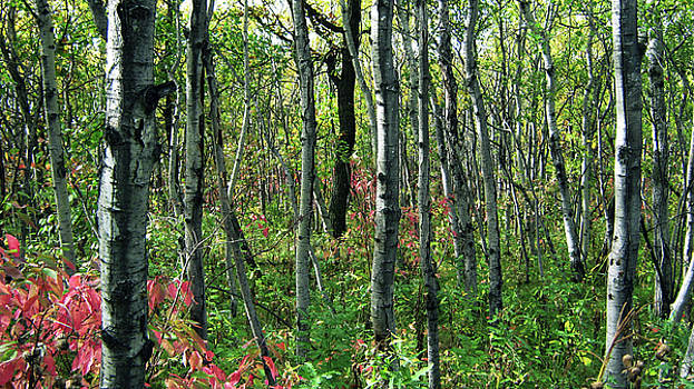 Autumn Woods by Emma Frost