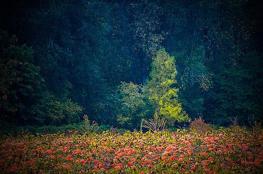 Autumn's Arrival by Larry Goss