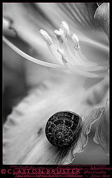 Clayton Bruster - B and White Floral with Snail