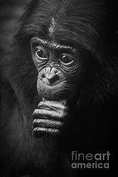Heiko Koehrer-Wagner - Baby Bonobo Portrait