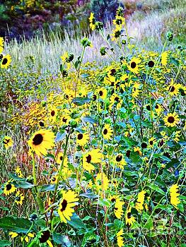 Back Eyed Susans by Annie Gibbons