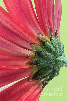 Backside of flower by Jim Wright