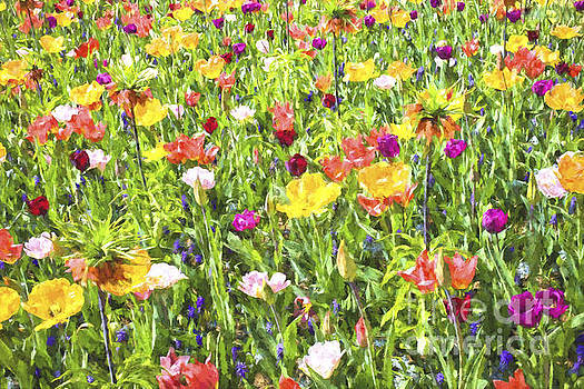 Patricia Hofmeester - Background of colorful flowers