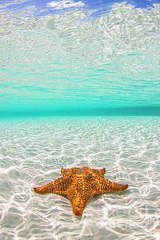 Bahama Beauty by Adrian E Gray