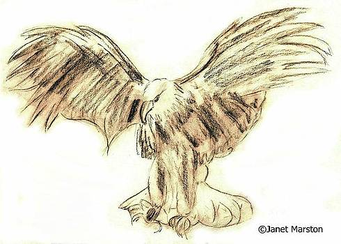 Bald Eagle Sketch by Janet Marston