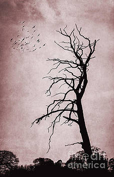 Svetlana Sewell - Bare Tree